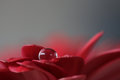 Drop On Red Flower Petal Royalty Free Stock Photo - 62400235
