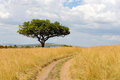 Landscape With Tree In Africa Royalty Free Stock Images - 62432599