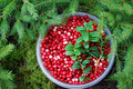 Cranberries Royalty Free Stock Photography - 6258077