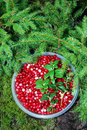 Cranberries Royalty Free Stock Photo - 6258115