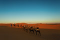 Sillhouette Of Camel Caravan Going Through The Desert At Sunset Royalty Free Stock Image - 62506276