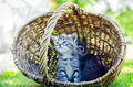 Kitten  In A Basket Stock Photography - 62586162
