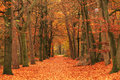 Autumn Road Royalty Free Stock Photography - 62591817