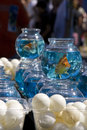 Gold Fish In A Bowl Stock Image - 6264411