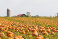 Pumpkin Field In A Country Farm,   Autumn Landscape. Stock Photography - 62645272