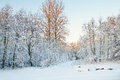 Winter, Hoarfrost And Rime On Trees. Stock Photo - 62672660