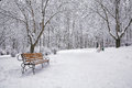 Snow-covered Trees And Benches In The City Park Royalty Free Stock Images - 62696799