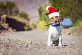 Abandoned And Lost Dog At Christmas Royalty Free Stock Image - 62763516