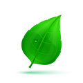 Spring Green Leaf With Drops Of Water Royalty Free Stock Photography - 62779957