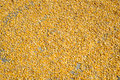 Drying Corn Royalty Free Stock Images - 62796749