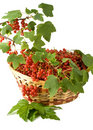 Red Currant Royalty Free Stock Photography - 6283637