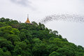 Gold Pagoda With Bats Stream Royalty Free Stock Images - 62844079