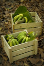 Green Bananas In Wood Boxes Royalty Free Stock Photography - 62896987