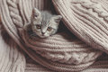 Kitten Is Resting On A Blanket Royalty Free Stock Photos - 62900878