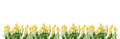 Yellow Tulips Border Royalty Free Stock Images - 62908089