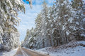 Snow Covered Woods - Beautiful Forests Along Rural Roads. Stock Photography - 62952762