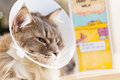 Selective Focus Of A Sick Cat With Veterinary Cone On Its Head Royalty Free Stock Photography - 62953527