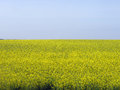 Background Of Yellow Field And Blue Sky Stock Image - 62957631