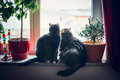 Cats Sits On Window Sill And Looking Outside Stock Photos - 62962373