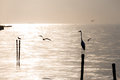 Seagulls And Egret On The Beach Royalty Free Stock Image - 63010366