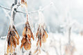 Leaves Covered By Snow And Ice On A Winter Day Royalty Free Stock Images - 63018549
