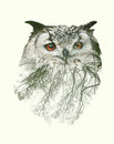 Double Exposure Portrait Of Owl And Tree Branch Stock Image - 63039881