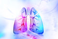 Human Lungs Royalty Free Stock Images - 63048209