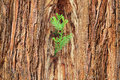 Small Sprout On Old Tree, Symbolizing New Life, New Project Or N Stock Images - 63084884