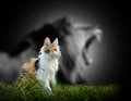 Cat With Lion Shadow Stock Image - 63095121