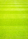 Green Grass Field Background, Texture, Pattern Royalty Free Stock Photos - 63131018
