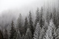 Frozen Winter Forest In The Fog Royalty Free Stock Photo - 63133055