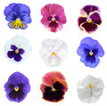 Pansy Flower Royalty Free Stock Images - 63140709