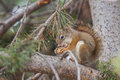 Squirrel Stock Image - 63180771