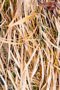 Dry Grass Royalty Free Stock Images - 63216669