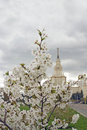 Moscow State University. Blooming Apple Tree. Stock Photos - 63221323