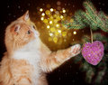 Image Of Red Cat Playing With Christmas Decorations Hanging Royalty Free Stock Photo - 63226865