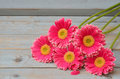 Pink Yellow  Gerbera Daisies In A Border Row On Grey Old Wooden Shelves Background With Empty Copy Space Royalty Free Stock Photography - 63237587