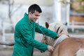 Veterinarian With Pony Horse Royalty Free Stock Image - 63250096
