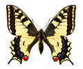 Beautiful Butterfly Royalty Free Stock Image - 6332696