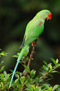 Parrot Stock Image - 63376721