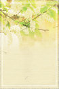 Abstract Paper Spring Background With Branch Of Bird Cherry In Bloom Stock Photos - 63391263