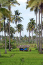 Green And Palm Trees Stock Image - 6341621