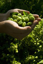 The Flat Hand With Hop Stock Image - 6341711