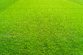 Green Grass Field Background, Texture, Pattern Stock Images - 63417624
