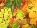 Autumn Leaves Royalty Free Stock Image - 6356786