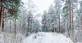Winter Forest During A Snowfall Royalty Free Stock Photography - 63500247