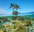 Split Coconut Trees Islet And Corals Underwater Royalty Free Stock Image - 63532656