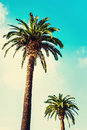 Palm Trees At Tropical Coast In Vintage Style And Film Toned Ag Royalty Free Stock Images - 63573099