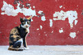 Tabby Cat Sitting On Crack Red Wall Background Royalty Free Stock Photos - 63578118