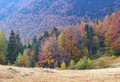 Autumn Forest Stock Photography - 6365332